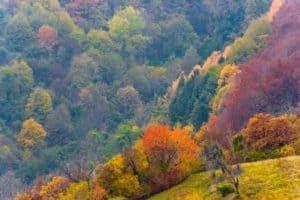 dolomites - cansiglio forest