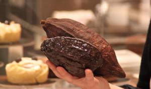 Cioccolateria artigianale: Visita e assaggi a pochi chilometri da Venezia!