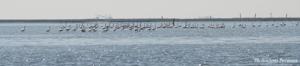 venezia laguna natura