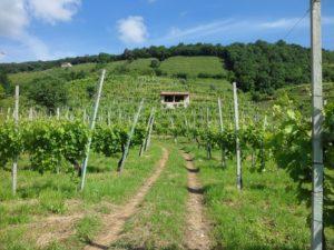 degustazione vini bilologici