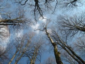 Escursioni naturalistiche: Bramito del Cervo in Amore