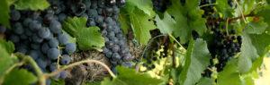 una degustazione di vini