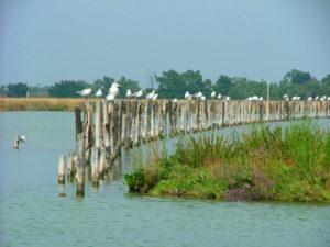 escursione nella laguna orientale