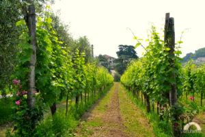 degustazione-vini-colli-euganei--