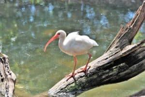 fauna laguna