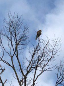 Uccelli laguna di Venezia